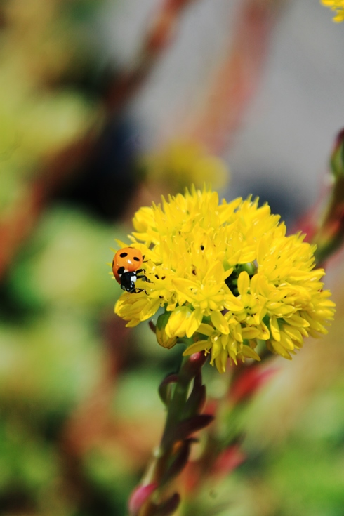 Ecological benefits green roofs