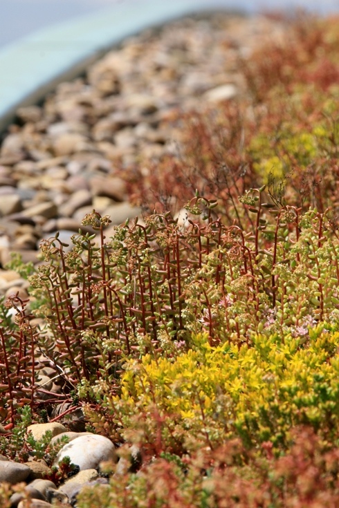 Green Roofs Maintenance