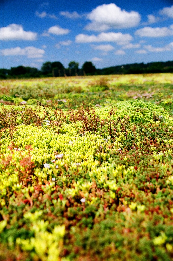Green Roofs - Is it worth it?